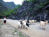 Trekking Bac Ha Ha Giang Visit Khau Lan Lang Tan Hill tribe villages